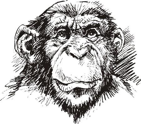 chimp: chimp monkey head in black and white color Illustration