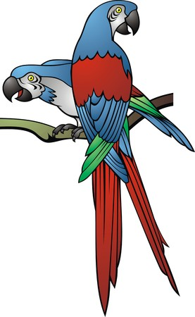 maccaw: wild parrot isolated on the white background Illustration