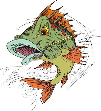 poissons plie rouge isolé sur le fond blanc Vecteurs