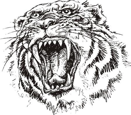 bonita cabeza de tigre aislado en el fondo blanco