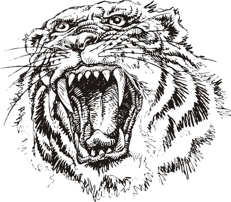 tigress: nice tiger head isolated on the white background Illustration