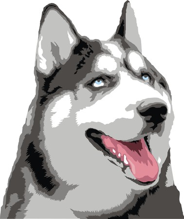 stylistic embellishments: head of wolf isolated on the white background Illustration