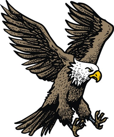 swooping: american eagle isolated on the white background