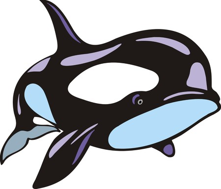 orcinus: orca fish isolated on the white background