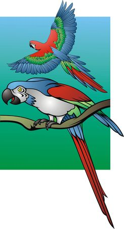 maccaw: two colro parrots as very nice background