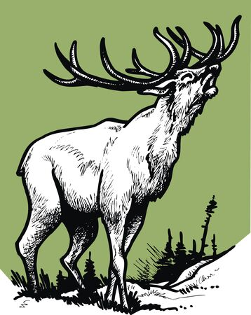 big stag isolated on the green background
