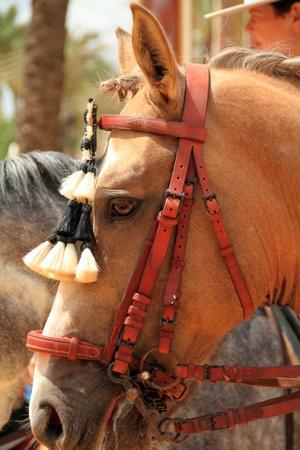 Horse Editorial