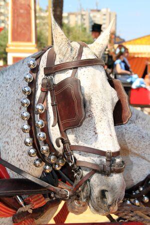 jerez: draft animal at the fair in Jerez Editorial