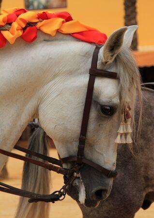 White Horse Fair in Jerez