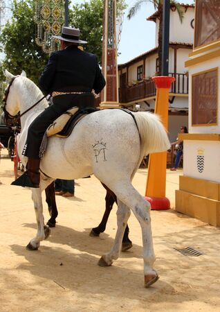 jerez: Rider and horse in Jerez Editorial