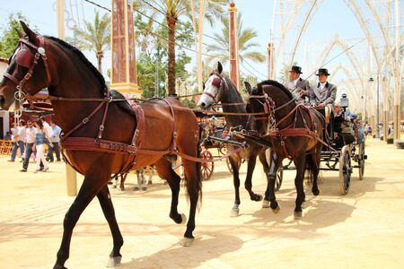horse traction: Hitch horses at the Fair of Jerez Editorial