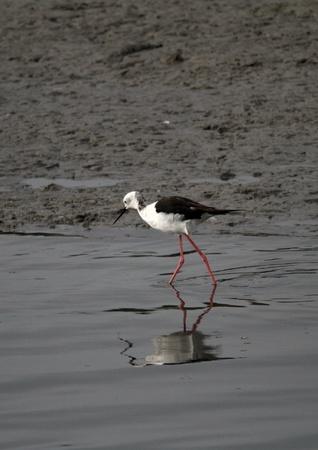 zancos: pilotes en los pantanos