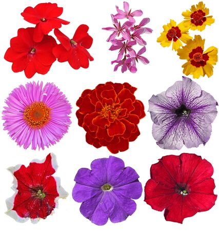 9 nice spring colorful flowers isolated on white background