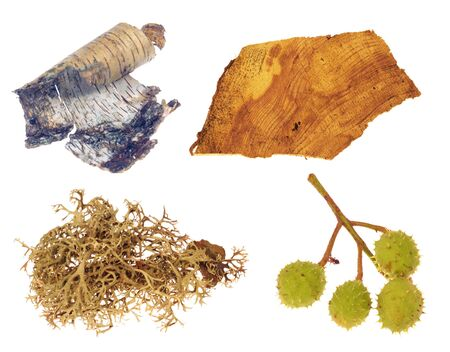 chestnut, lichen, birch tree and wood isolated on white background Stock Photo