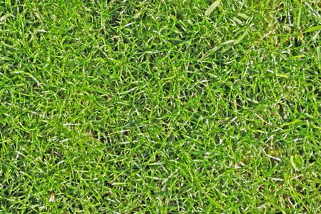 texture of fresh grass from soccer field  Stock Photo