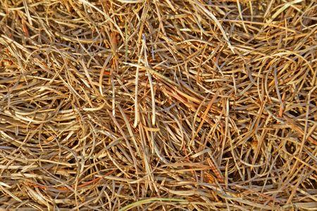 fir needles background