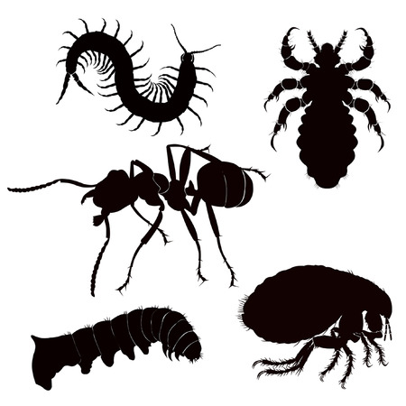 louse: silhouette black dangerous insect