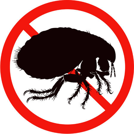 parasites: dangerous insect road sign black silhouette