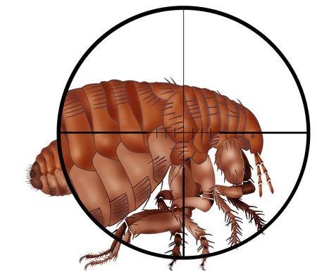 parasites: kill insect, gun,target,