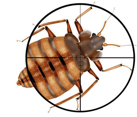 bedbug: kill insect, gun,target,