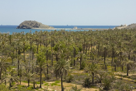palm trees with the sea behind in Fujairah  United Arab Emirates