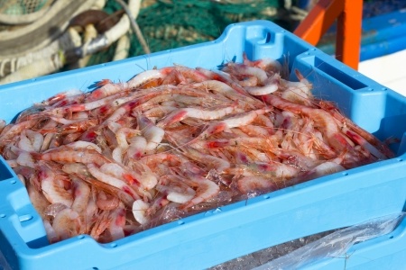 atilde: Prawn newly fished and stored in boxes with ice at port of Palamós in the Costa Brava, Catalonia  Spain  Stock Photo