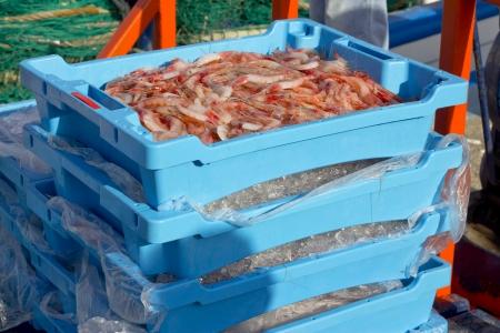 costa brava: Crevettes p�ch�es r�cemment et stock�s dans des bo�tes avec de la glace au port de Palam�s sur la Costa Brava, Catalonia, Espagne