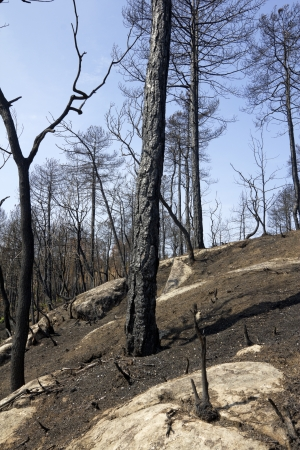 desolate: burned forest and desolate