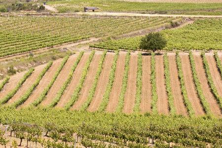 alt: Alt Camp vineyards in Catalonia (Spain)