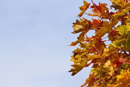 senescence: background leaves of autumn with distinct colours Stock Photo