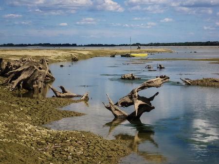 Drained hydro-accumulation lake of drava at the city Prelog with old rotten roots Stockfoto