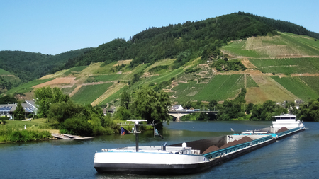 Long, white river ship transporting coal on river Rhine and behind him green hill with vineyard on sunny summer afternoon