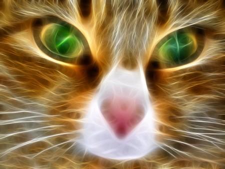 cara leon: Fant�stico gato