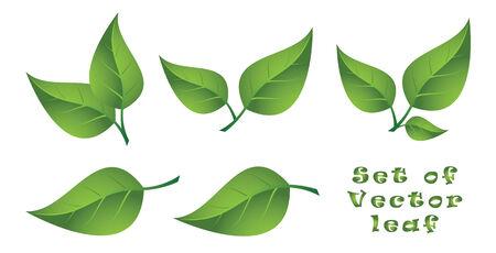 Set of Vector Leaf