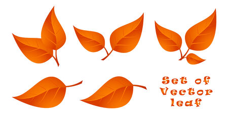 Set of Leaf. Autumn.
