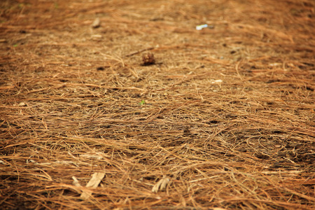 pinewood: Ground surface of pinewood forest covered with fallen twigs Stock Photo