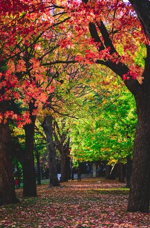 Beautiful Fall Season, Beautiful Autumn, Beautiful trees in Autumn Sunny day Stock fotó