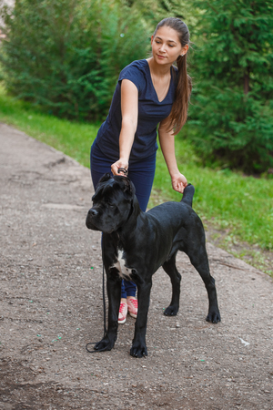 unsighted: Handler with a dog Cane Corso Italian