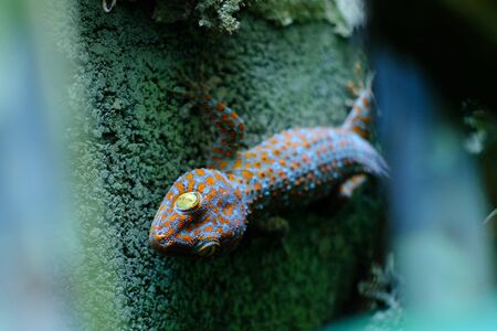 gecko on the wall 写真素材