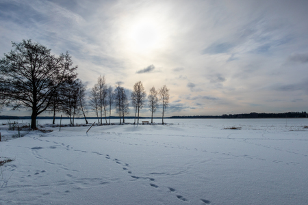 Trees in beautiful afternoon late winter frozen lake landscape. Stock Photo