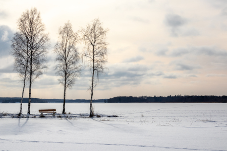 Three trees and a beach, beautiful afternoon late winter frozen lake landscape.