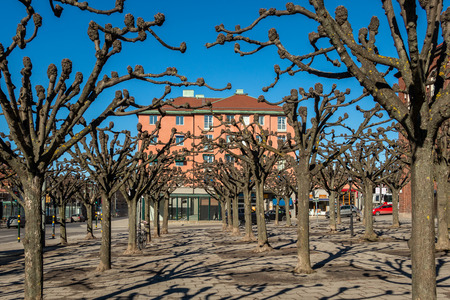 City square with many pruned trees and building early spring. Stock Photo - 99484294