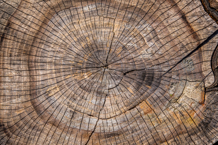 Center close-up of a plum tree log with cracks and annual rings. Stock Photo - 100831428