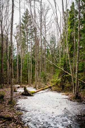 Forest glade with frozen ice early spring, vertical composition. Stock Photo
