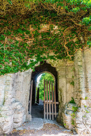 Entrance to an ancient ruin building covered with green creeper plant in Visby Gotland Sweden.