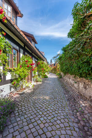 Beautiful summer view of the famous narrow cobblestone street with surrounding rose bushes and buildings in Visby Gotland Sweden.