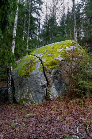 Wilderness woodland scene. A large boulder stone with a deep crack covered with moss.