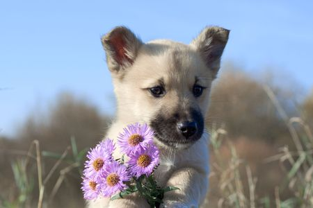 foreleg: puppy dog hold flowers in forefoots on blue sky background Stock Photo