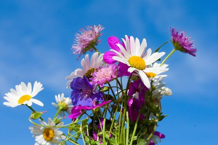 florets: bunch of wildflowers on blue sky background