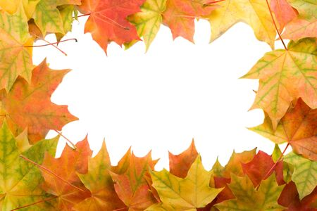 close-up frame from maple leaves, isolated on white photo